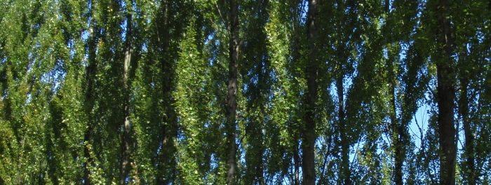 Combien d'arbres pour le futur écoquartier de l'Arsenal ?